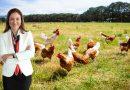 Dedeman Grubu Türkiye'deki Otellerinde Kafessiz Yumurta Kullanımına Geçti